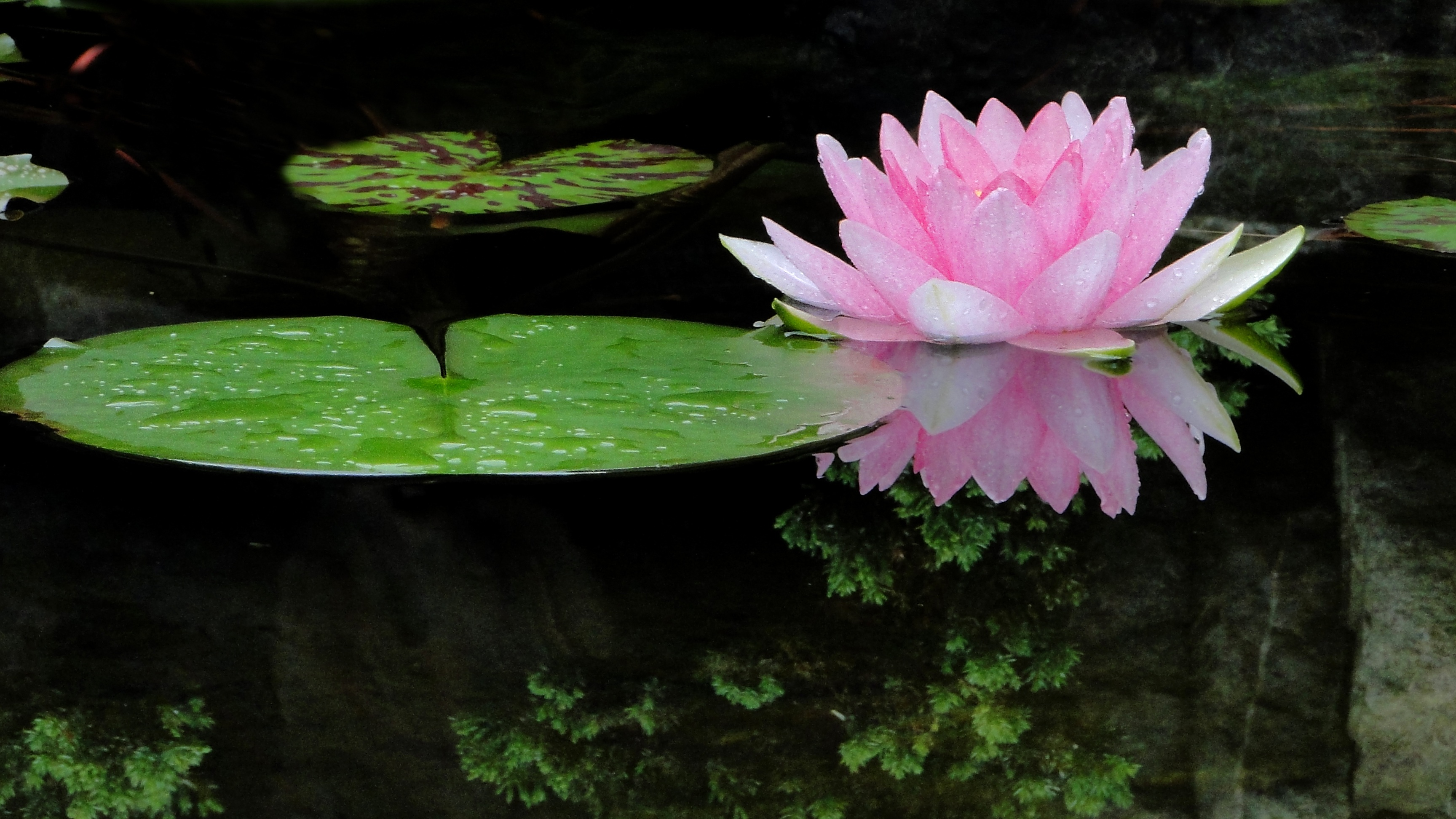 spirituele en persoonlijke groei